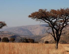 Scenic BURKEA AFRICANA KGASWANE